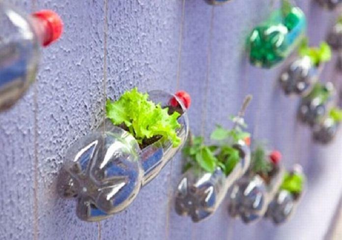 Tái chế chai nhựa phế liệu để trồng hoa